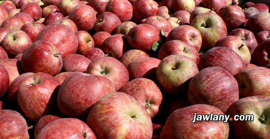 تفاح الجولان